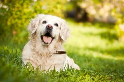 Il tuo nuovo negozio di alimenti ed accessori per Cani