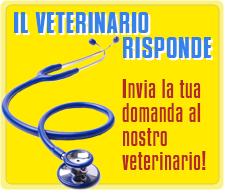 Consulenza Veterinaria gratuita Castelli Romani