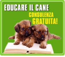 Consulenza comportamentale gratuita per cani ai Castelli Romani